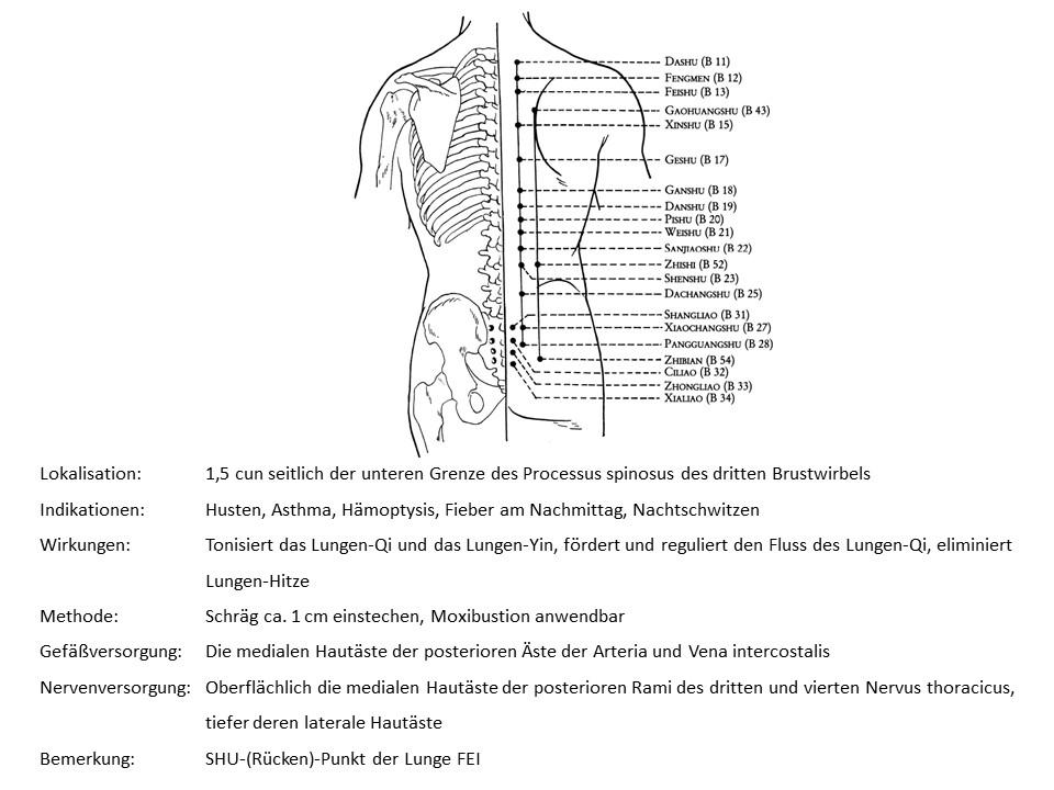 Akupunkturpunkt Blase 13