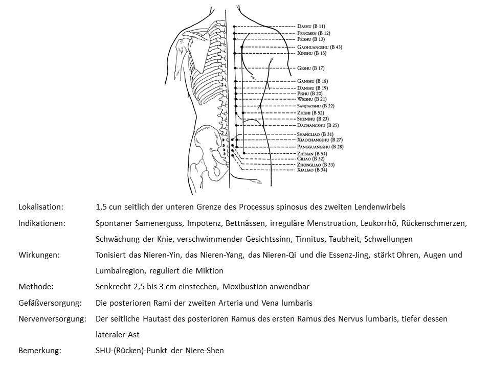 Akupunkturpunkt Blase 23
