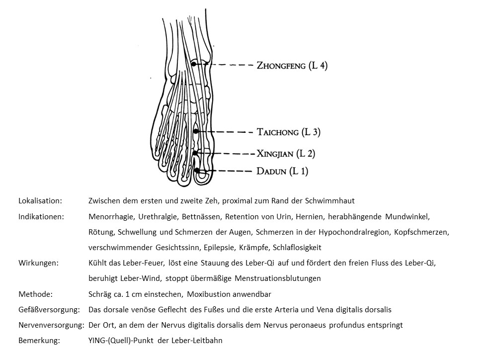 Akupunkturpunkt Leber 2