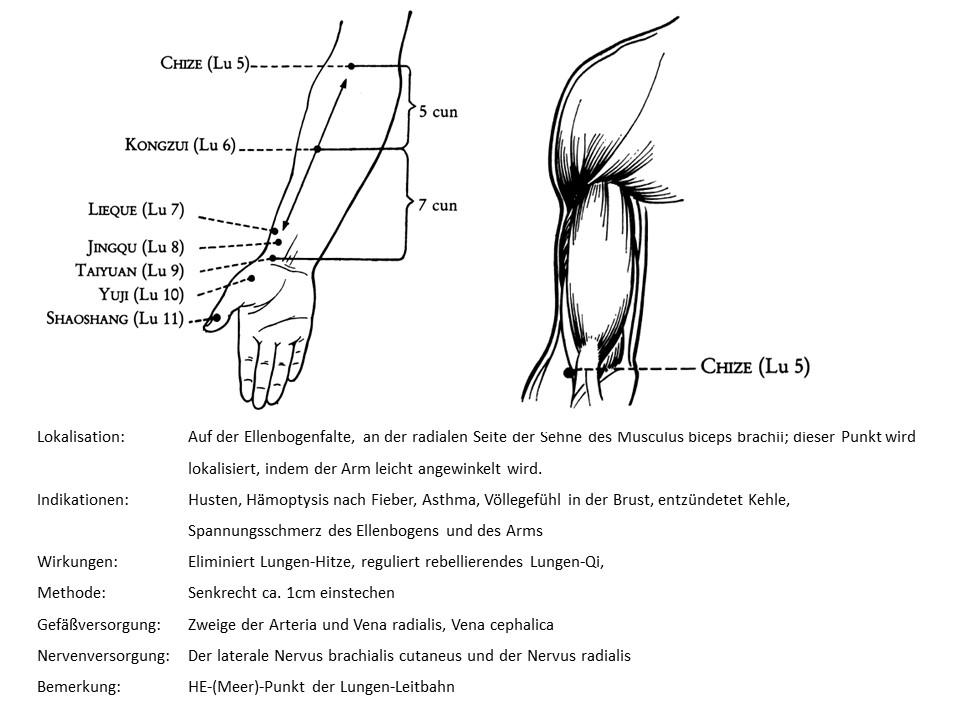 Akupunkturpunkt Lunge 5