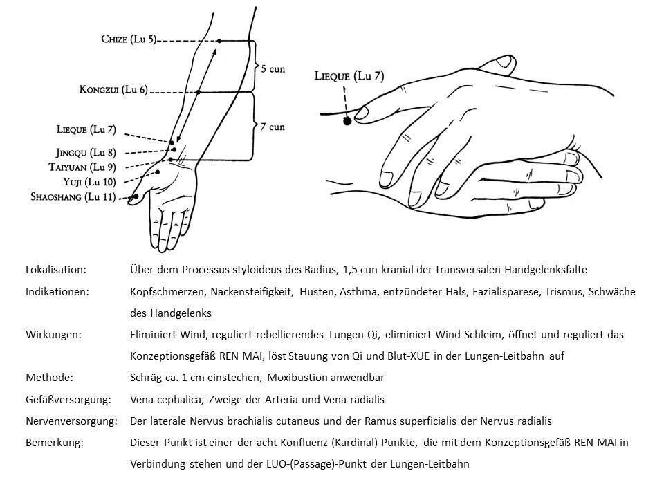 Akupunkturpunkt Lunge 7