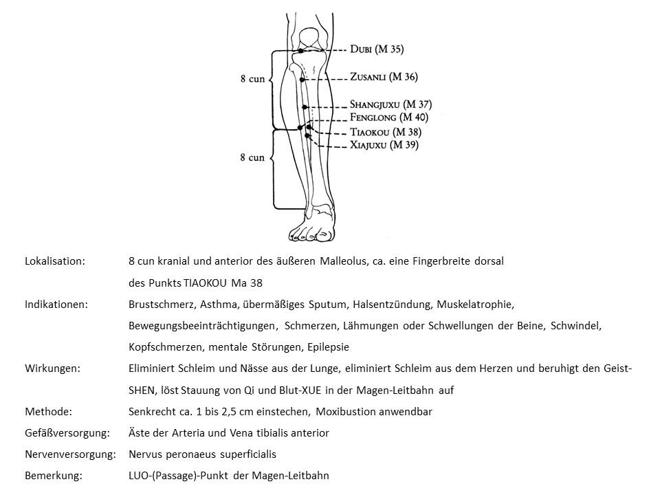 Akupunkturpunkt Magen 40