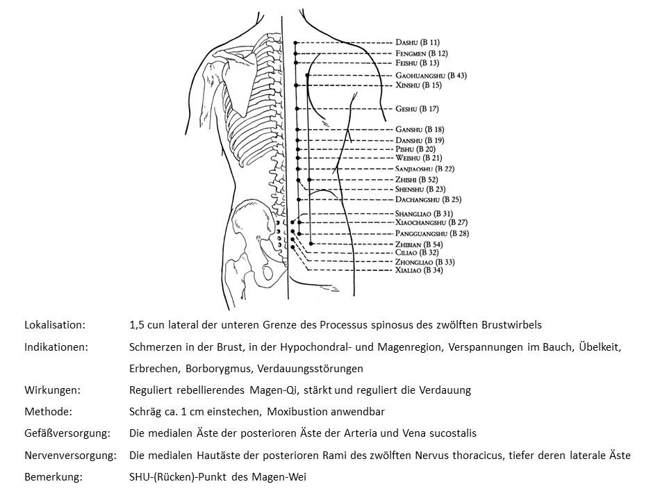 Akupunkturpunkt Blase 21
