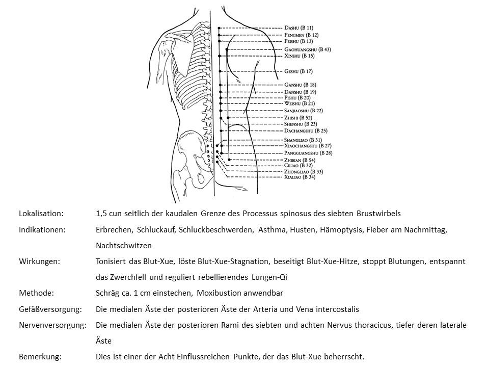 Akupunkturpunkt Blase 17