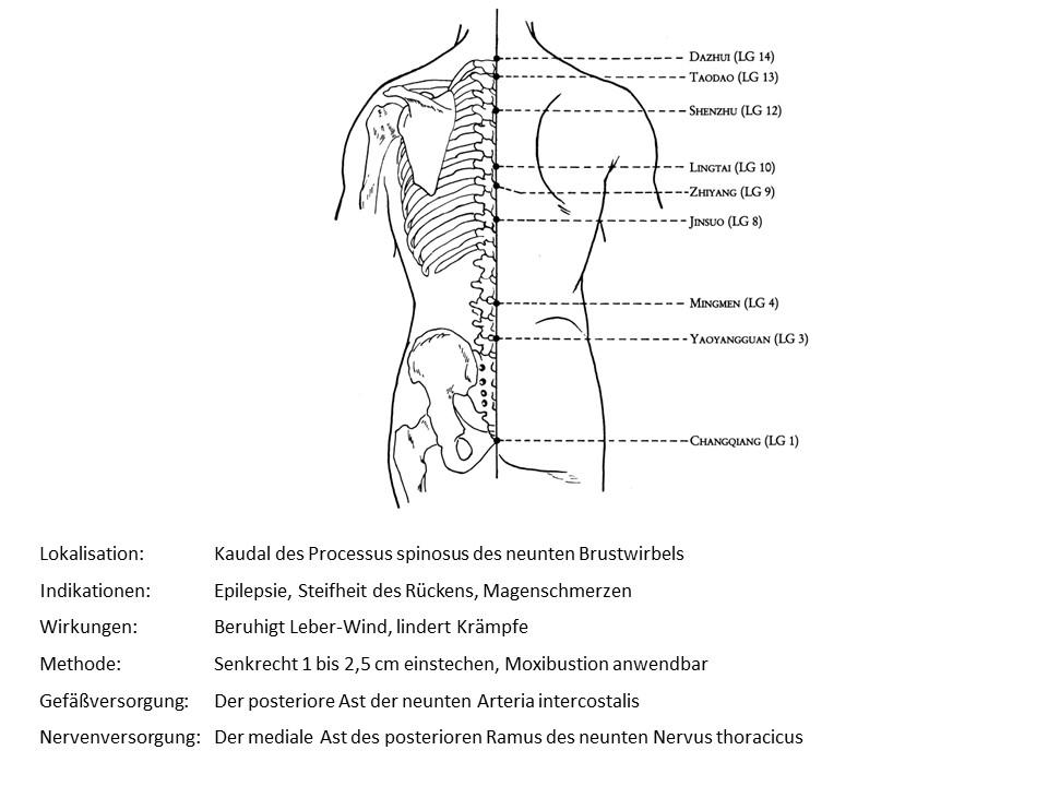 Akupunkturpunkt Lenkergefäß 8