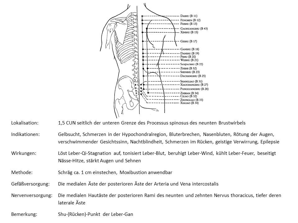 Akupunkturpunkt Blase 18