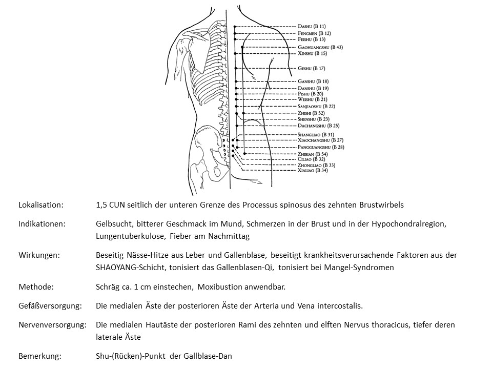 Akupunkturpunkt Blase 19