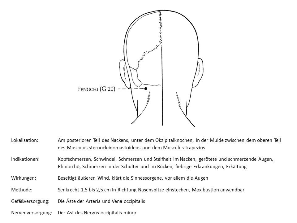 Akupunkturpunkt Gallenblase 20