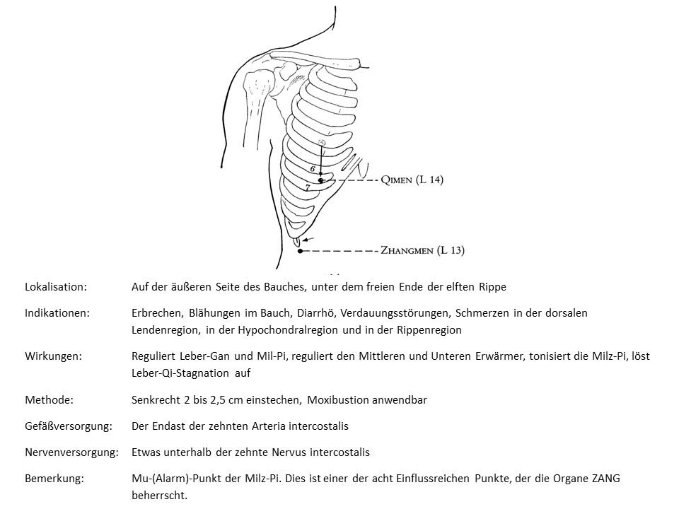 Akupunkturpunkt Leber 13