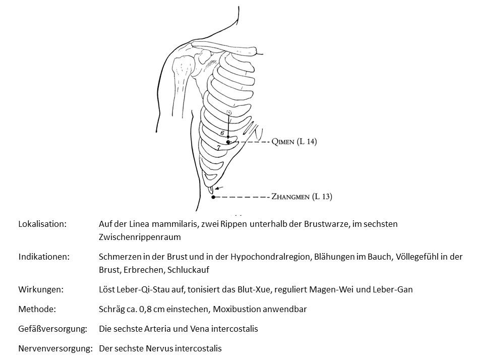 Akupunkturpunkt Leber 14