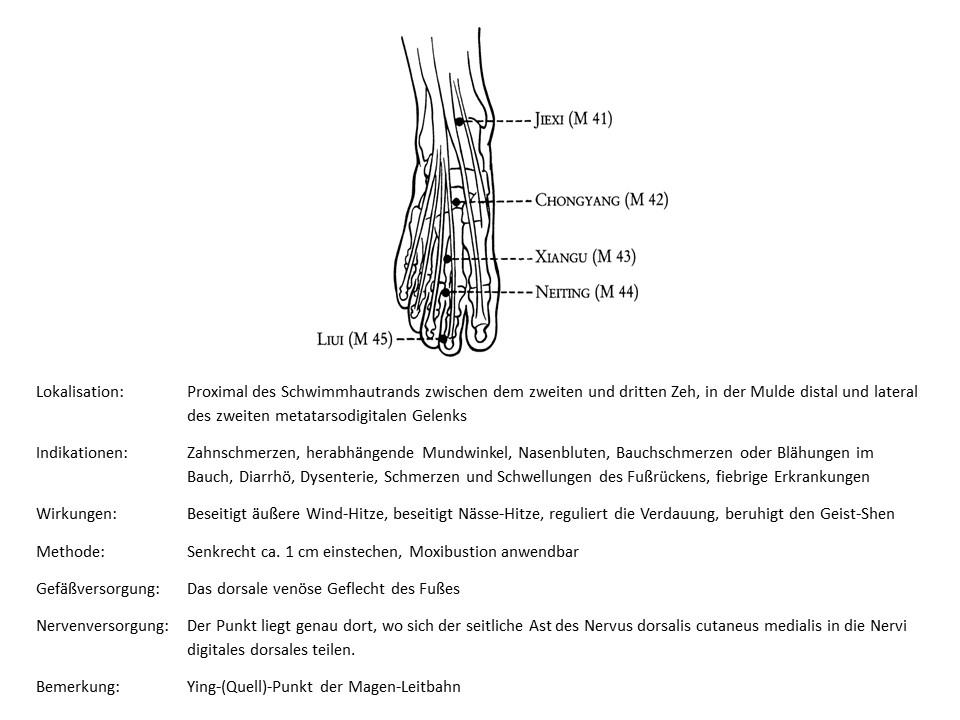 Akupunkturpunkt Magen 44