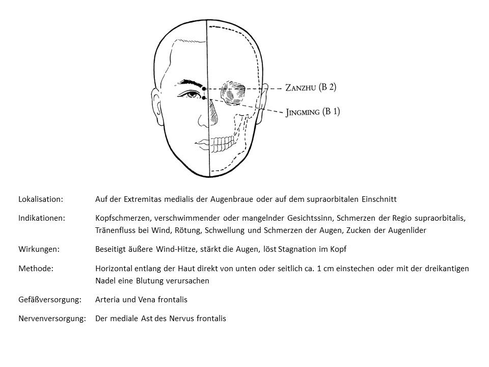 Akupunkturpunkt Blase 2