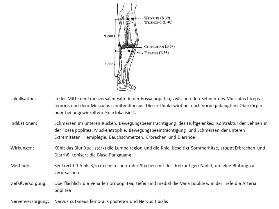 Akupunkturpunkt Blase 40