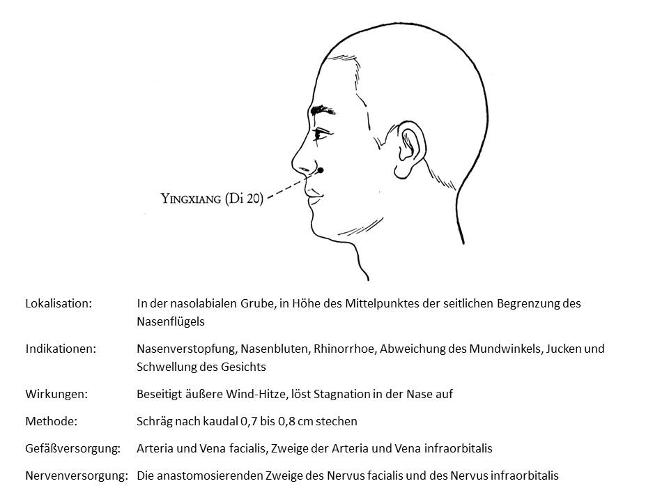 Akupunkturpunkt Dickdarm 20