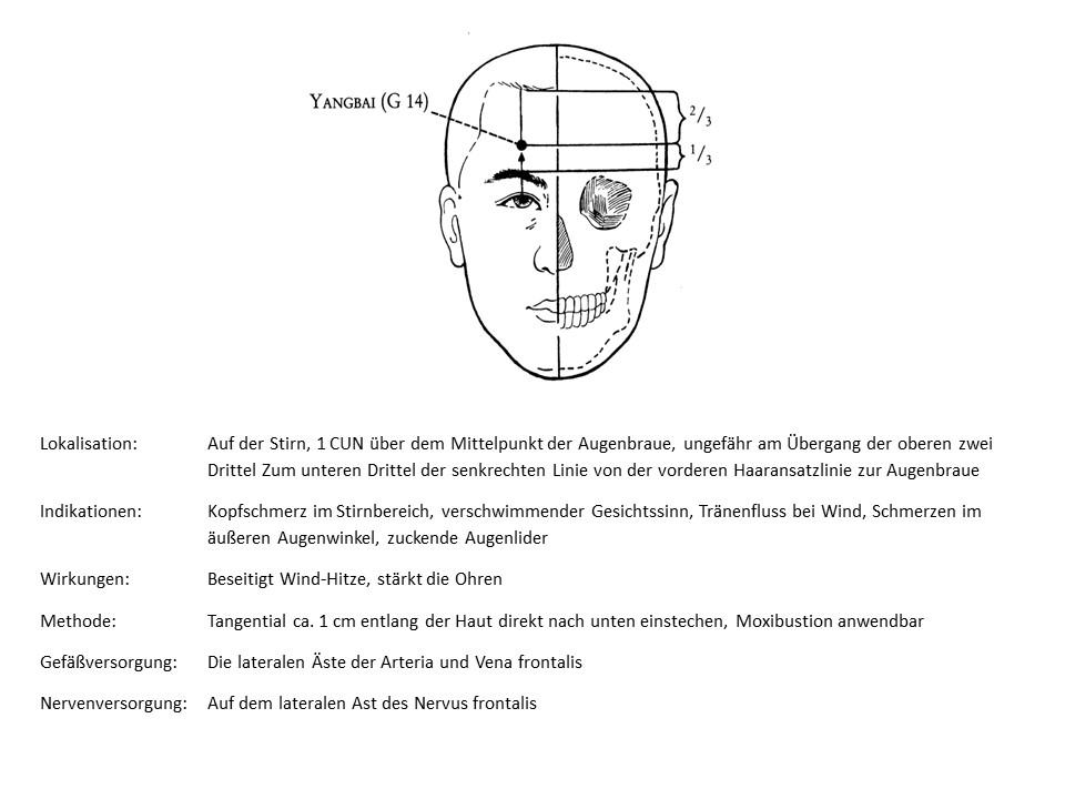 Akupunkturpunkt Gallenblase 14