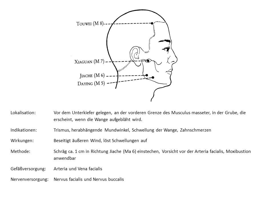 Akupunkturpunkt Magen 5