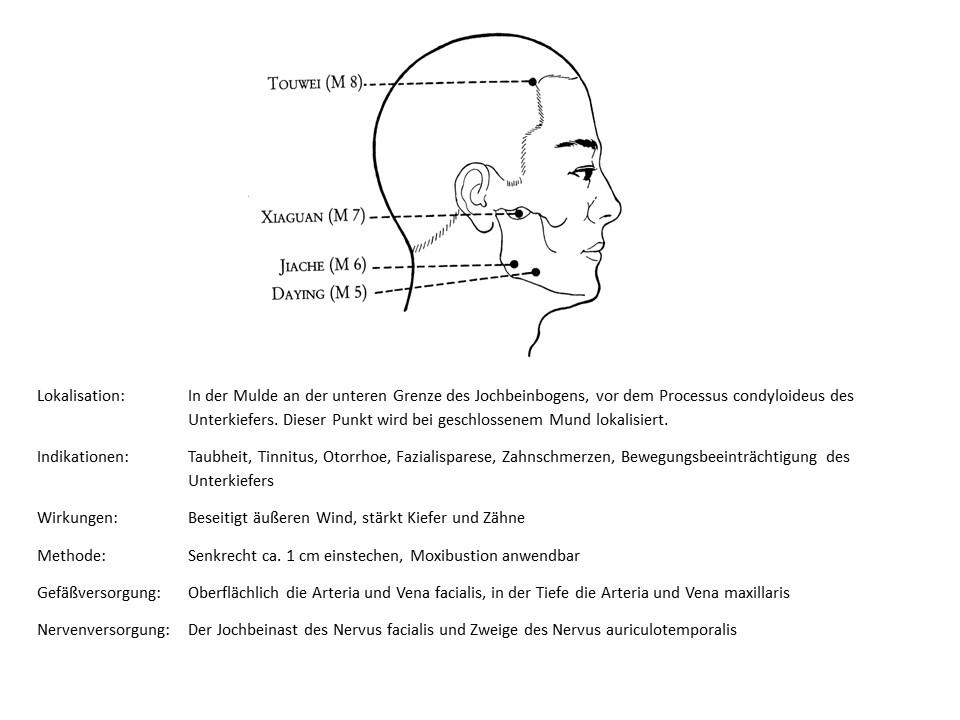 Akupunkturpunkt Magen 7