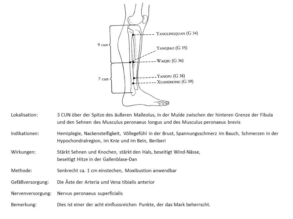 Akupunkturpunkt Gallenblase 39