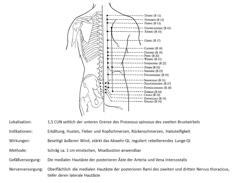 Akupunkturpunkt Blase 12