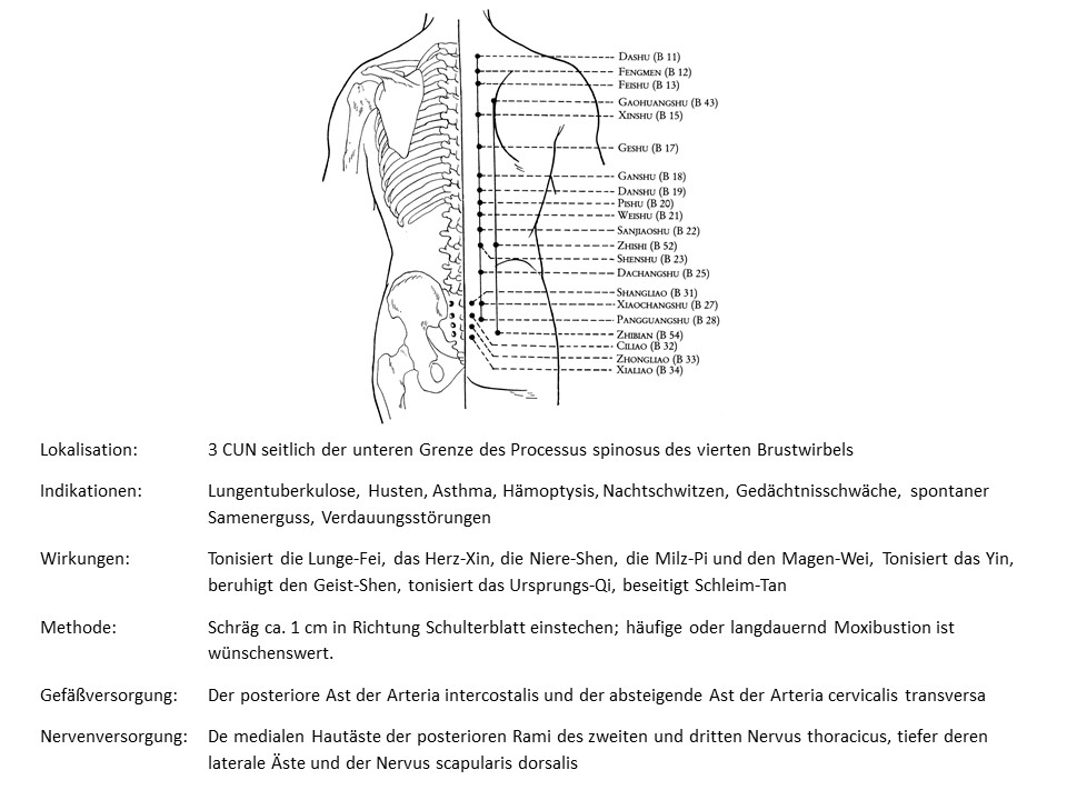 Akupunkturpunkt Blase 43
