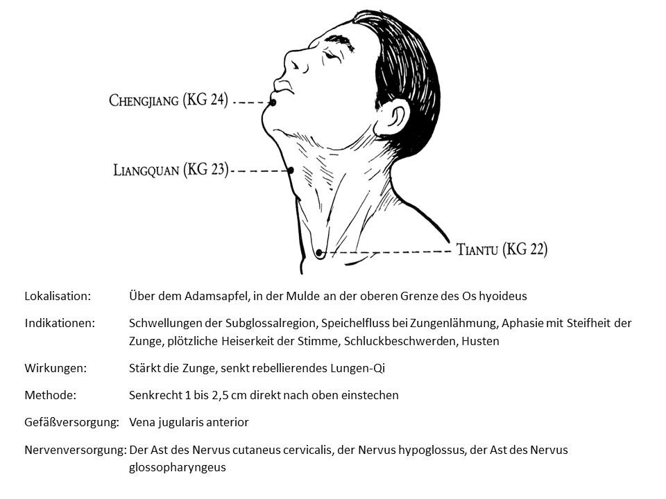 Akupunkturpunkt Konzeptionsgefäß 23