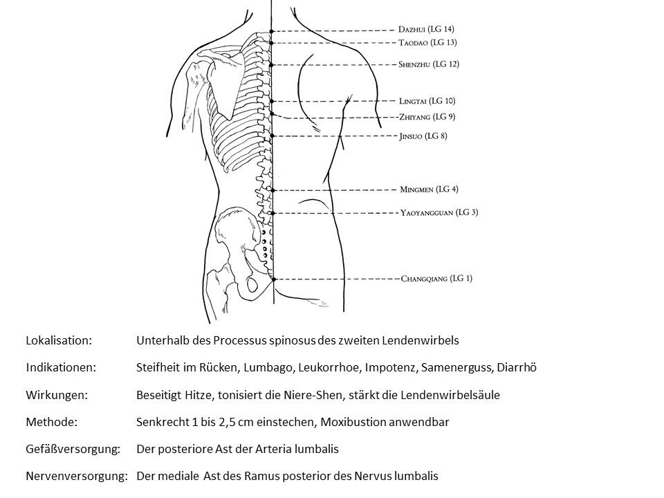 Akupunkturpunkt Lenkergefäß 4