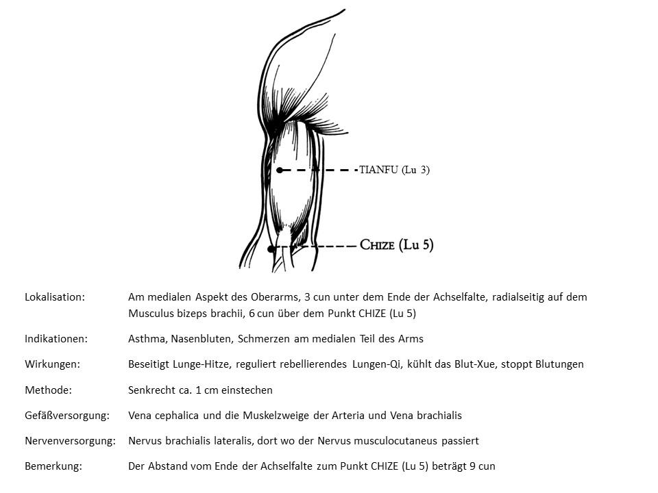 Akupunkturpunkt Lunge 3