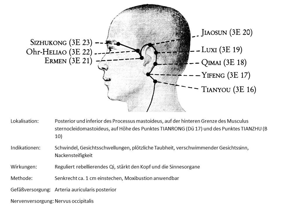 Akupunkturpunkt 3Erwärmer 16