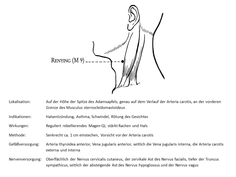 Akupunkturpunkt Magen 9