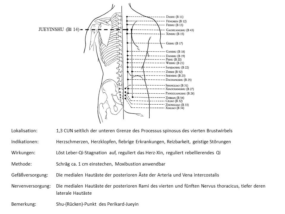 Akupunkturpunkt Blase 14