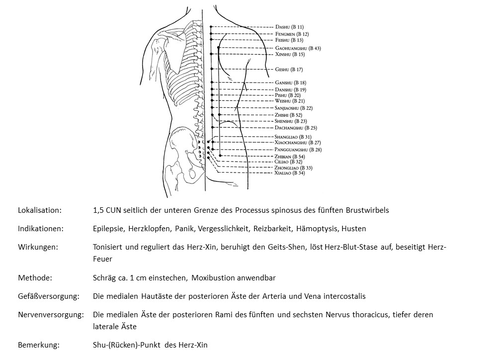 Akupunkturpunkt Blase 15