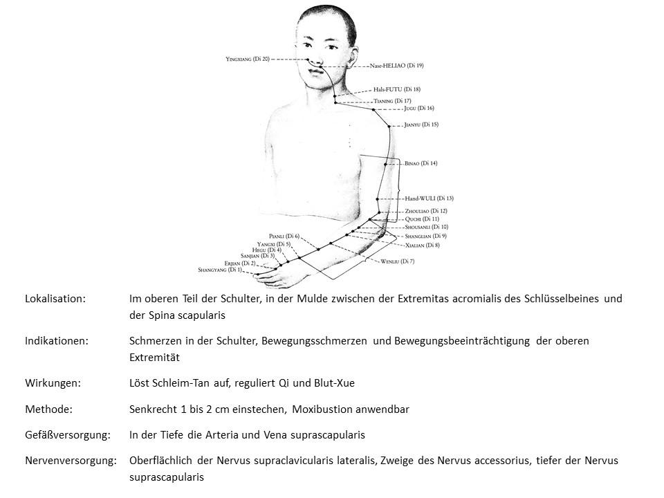 Akupunkturpunkt Dickdarm 16