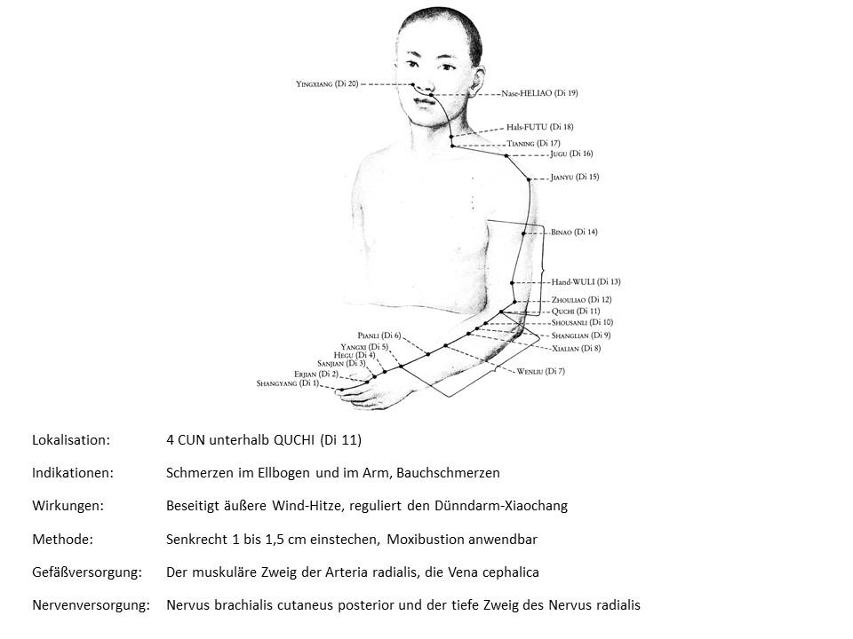 Akupunkturpunkt Dickdarm 8