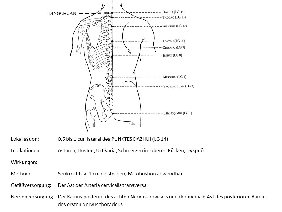 Akupunkturpunkt Ding Chuan