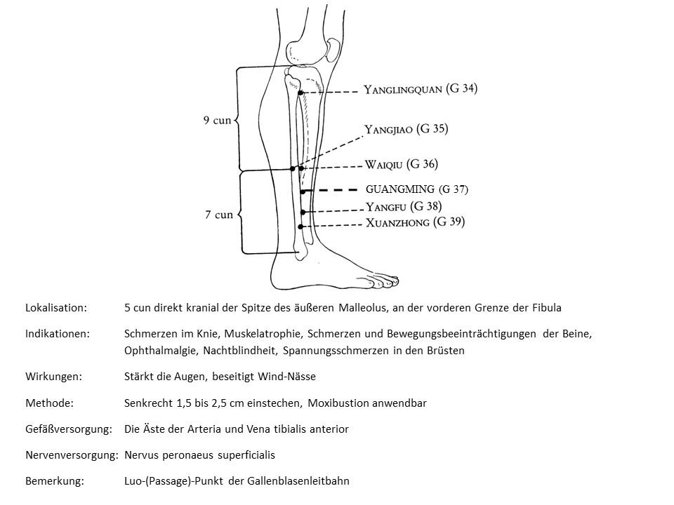 Akupunkturpunkt Gallenblase 37