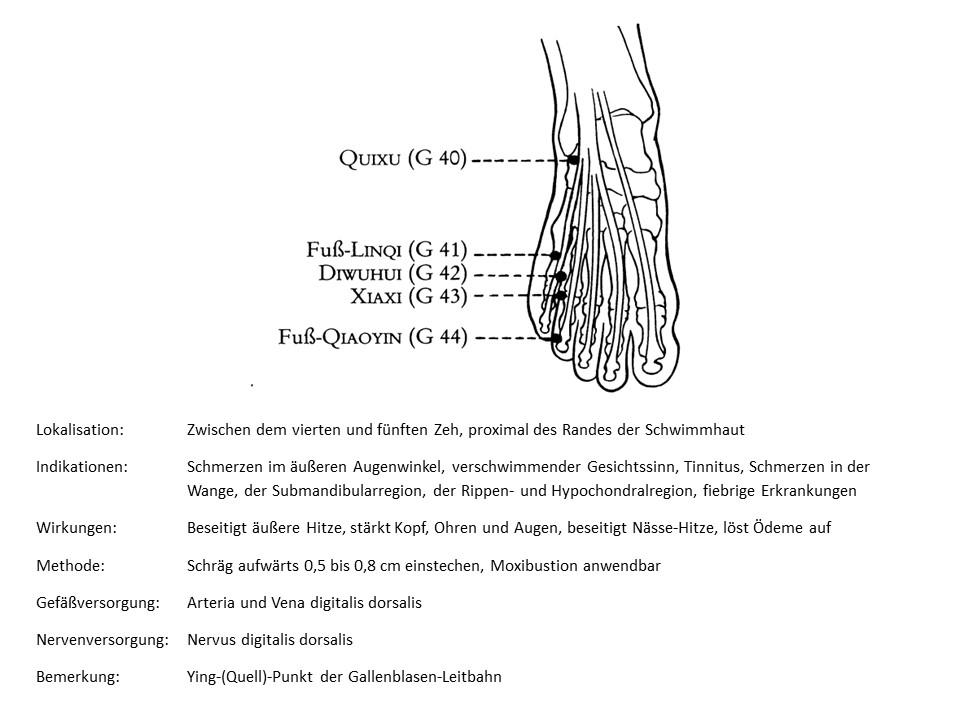 Akupunkturpunkt Gallenblase 43