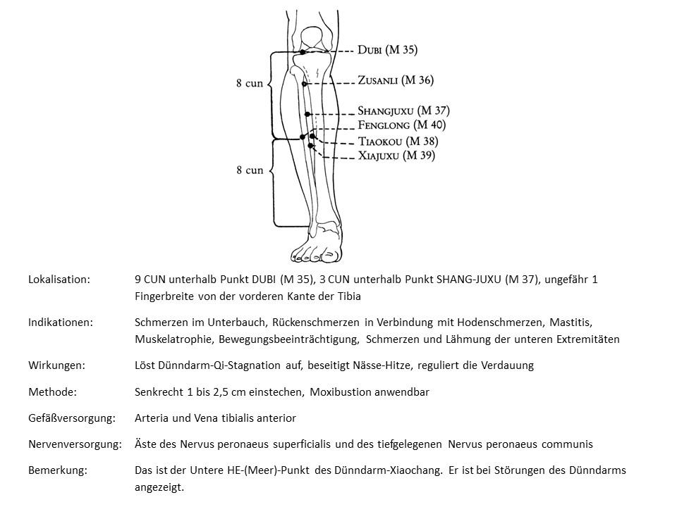 Akupunkturpunkt Magen 39