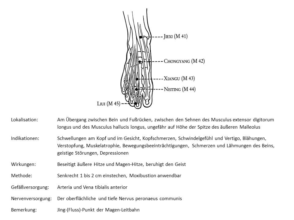 Akupunkturpunkt Magen 41