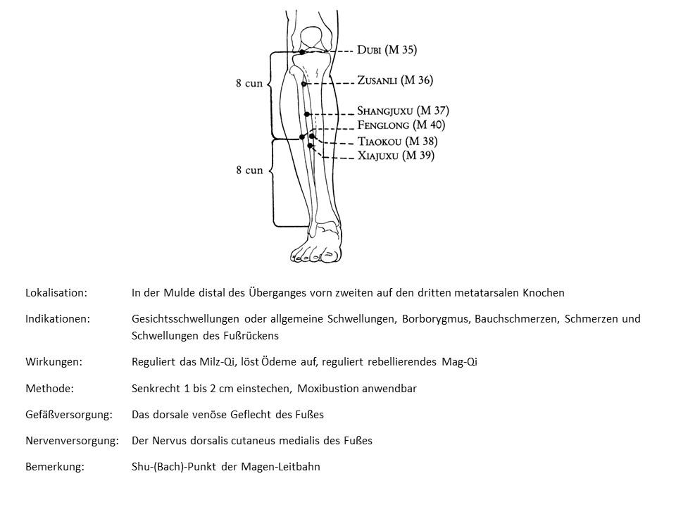 Akupunkturpunkt Magen 43