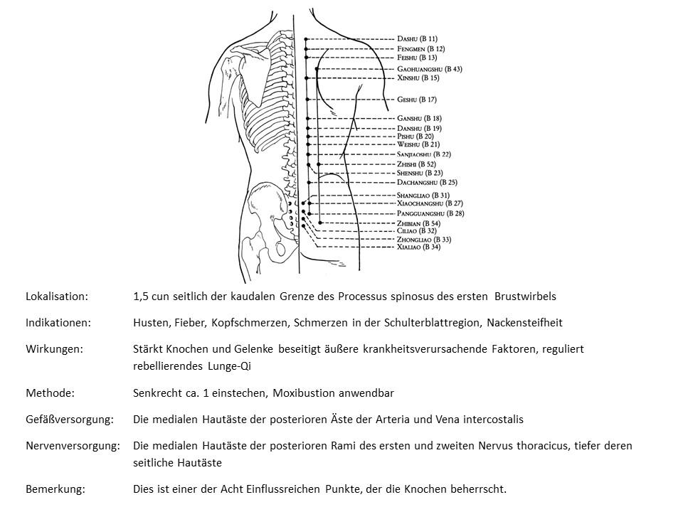 Akupunkturpunkt Blase 11