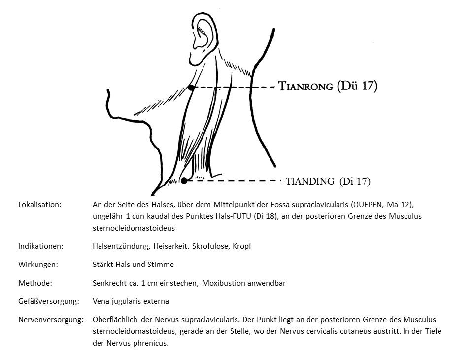 Akupunkturpunkt Dickdarm 17