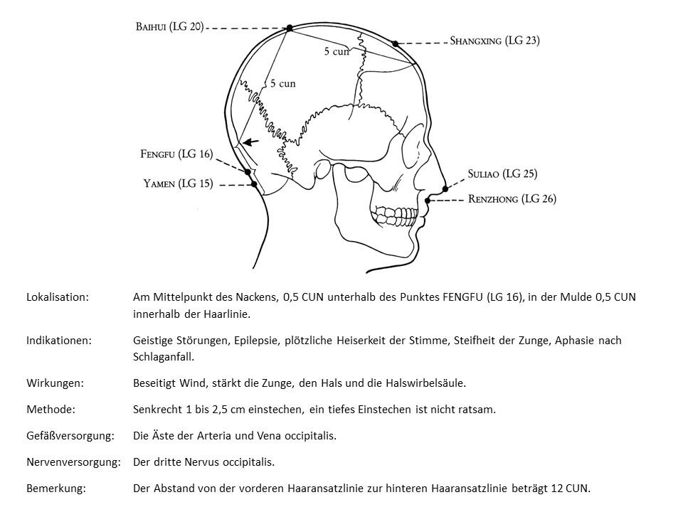 Akupunkturpunkt Lenkergefäß 15