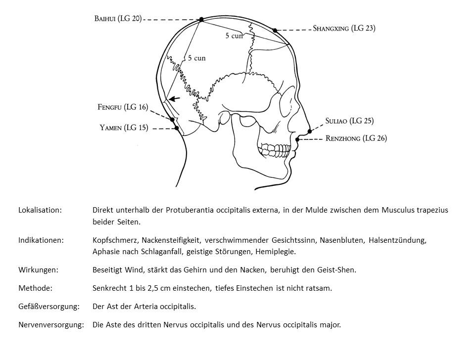 Akupunkturpunkt Lenkergefäß 16
