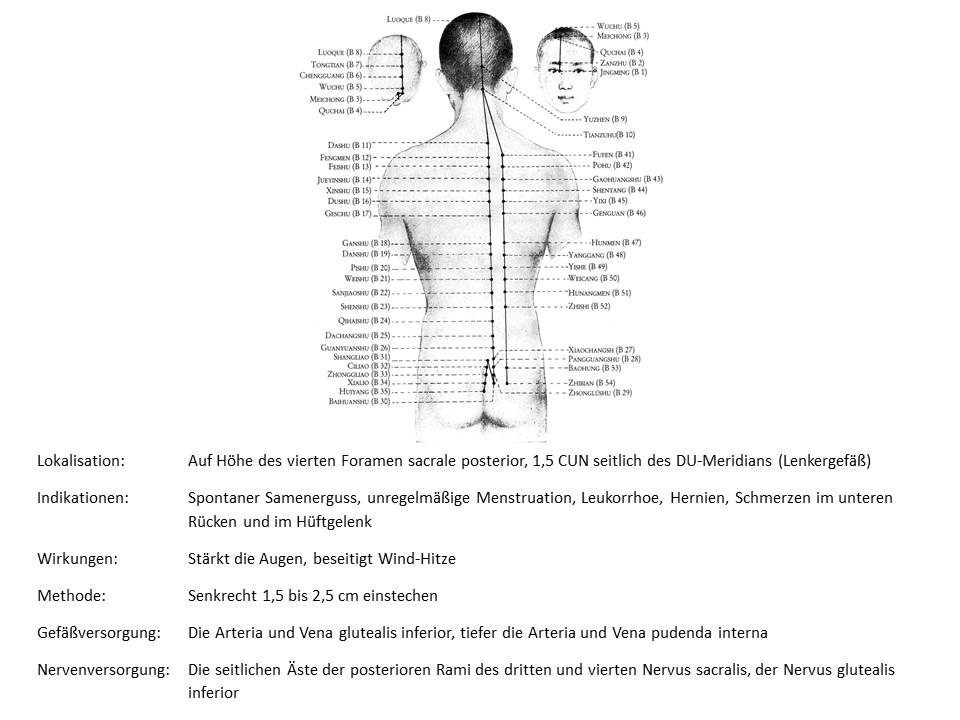 Akupunkturpunkt Blase 30