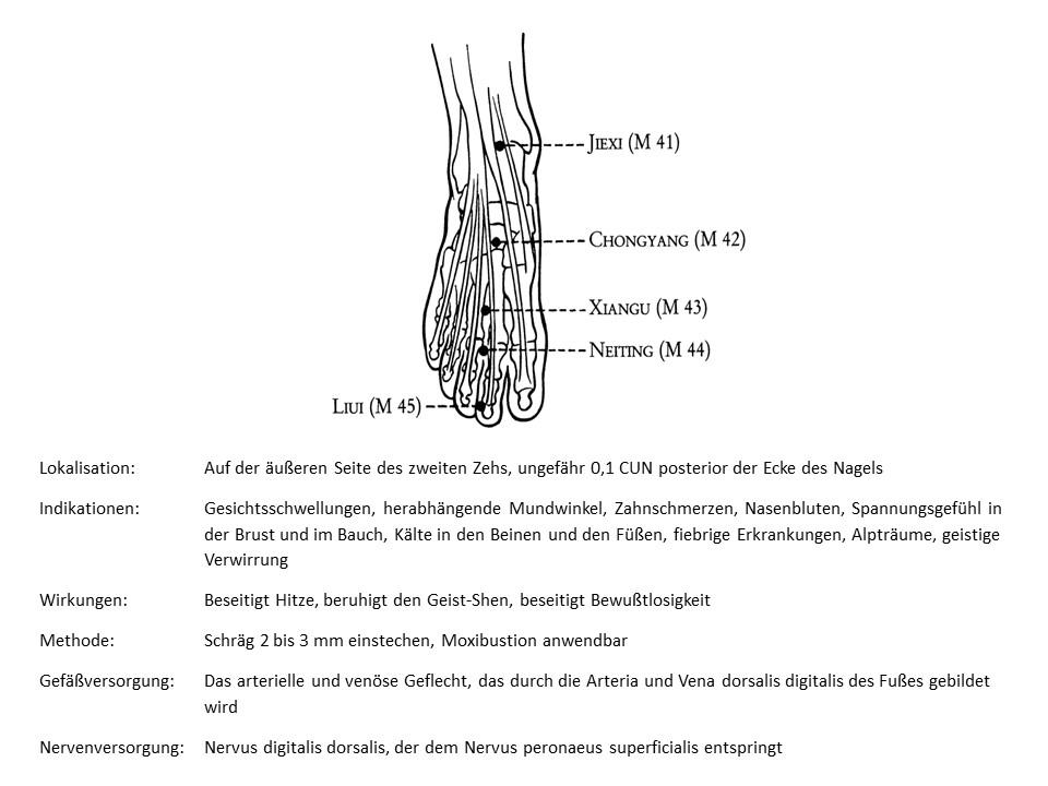 Akupunkturpunkt Magen 45