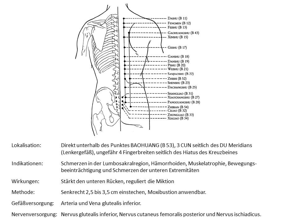 Akupunkturpunkt Blase 54