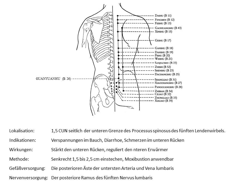 Akupunkturpunkt Blase 26