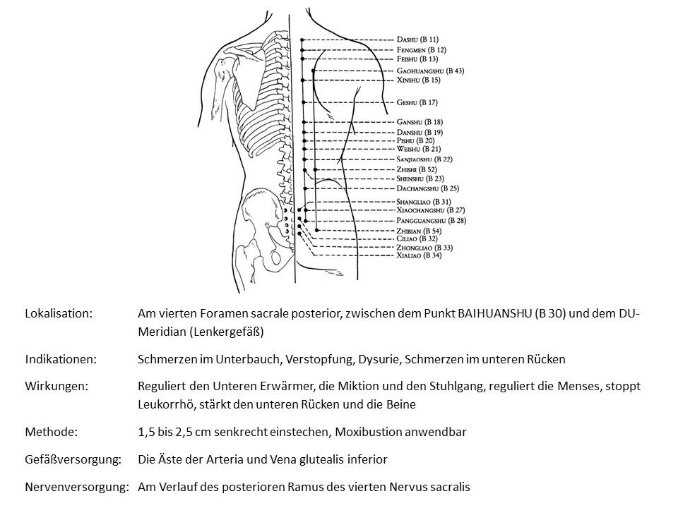 Akupunkturpunkt Blase 34