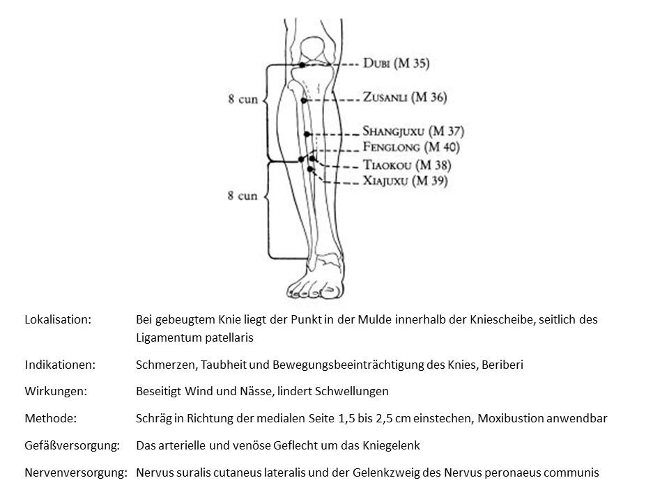 Akupunkturpunkt Magen 35