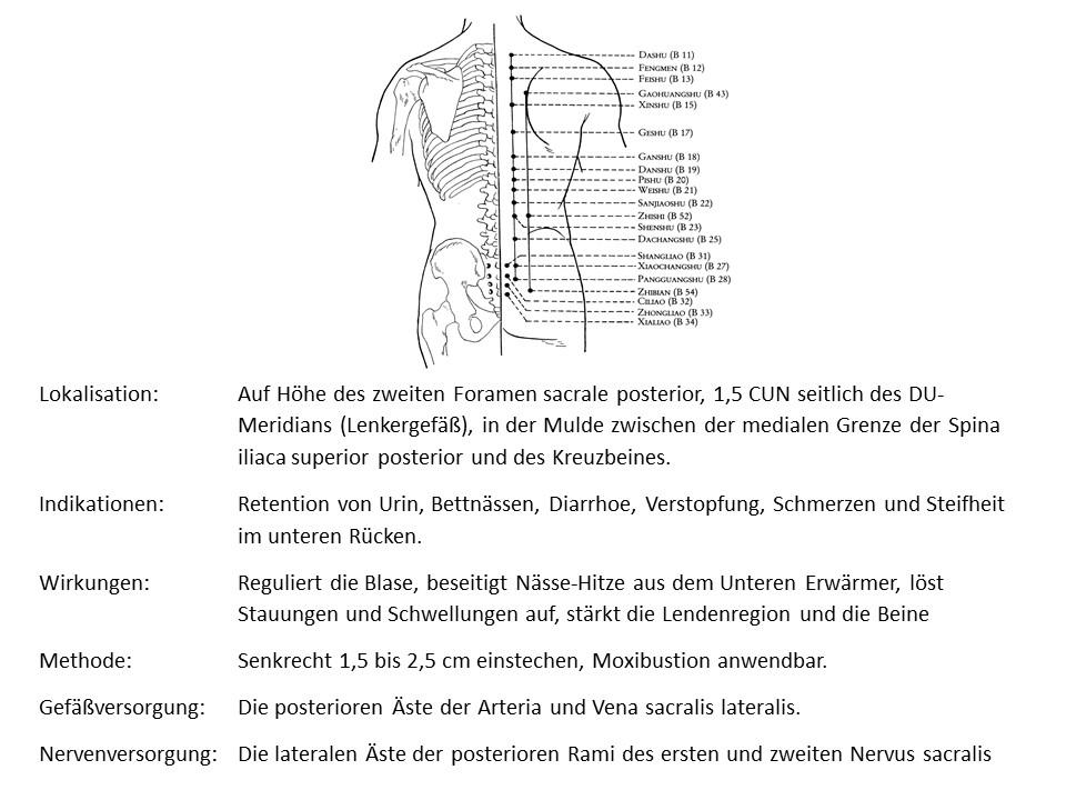 Akupunkturpunkt Blase 28